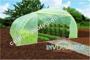El invernadero será el encargado de darle las mejores condiciones a sus cultivos.